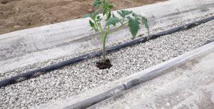 Χρήση ελαφρόπετρας σε Υδροπονικές καλλιέργειες