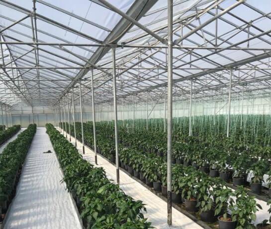 Αγροτικές εφαρμογές με ελαφρόπτρα - Υδροπονικές καλλιέργειες