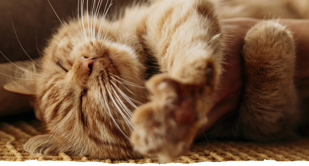 Pet, Υποστρώματα υγιεινής για κατοικίδια (bird litter, cat litter)