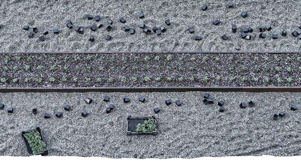 Ταρατσόκηπος - Milagro stone